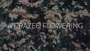 A Crazed Flowering