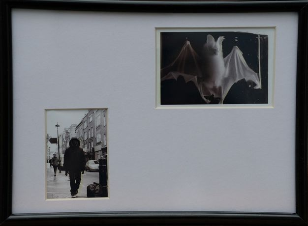 'Bat' 19x14cms Framed photograph