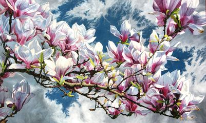 Magnolia  Oil on Canvas 36 x 61 inches