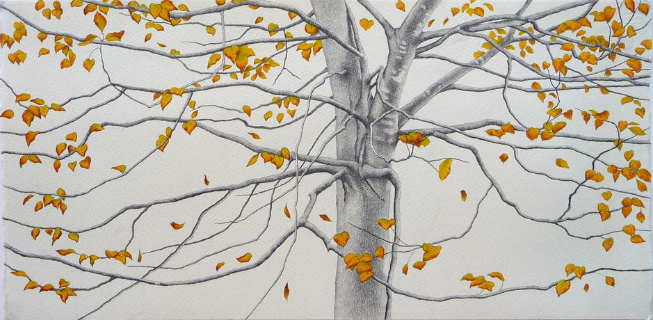 Ali Morgan, Autumn 08, pencil and charcoal, 28x56cm.