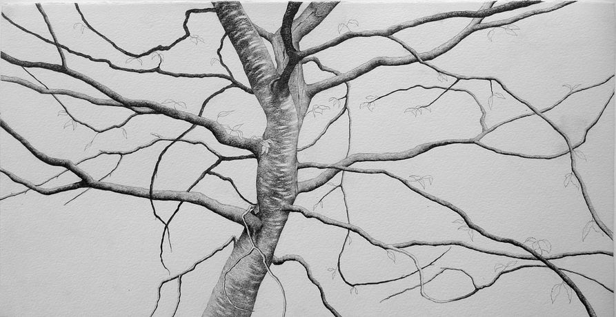 Ali Morgan, Spring 10, pencil and charcoal, 22x56cm.