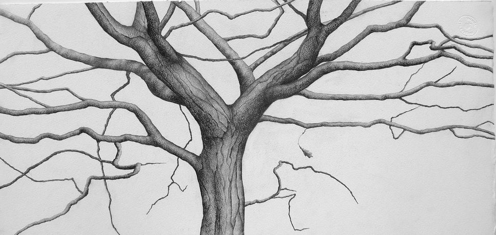 Ali Morgan, Winter 05, pencil and charcoal, 27x56cm.