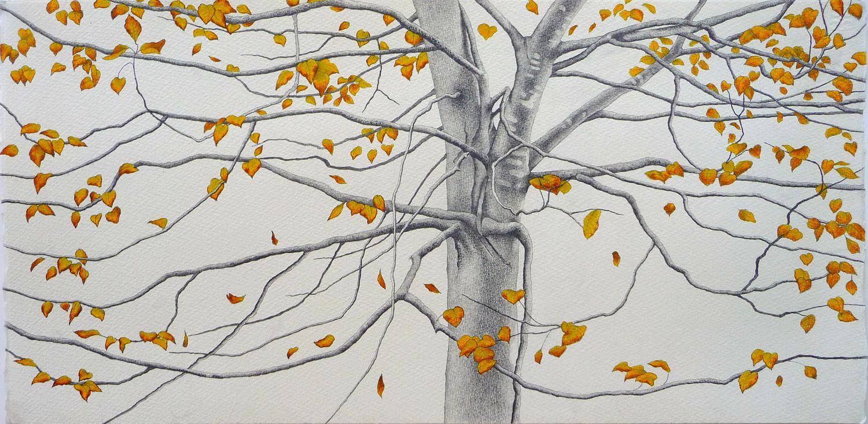 ali morgan spring summer autumn winter 40 tree drawings