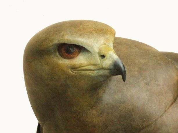 Close up head detail of the life sized Female Buzzard bronze