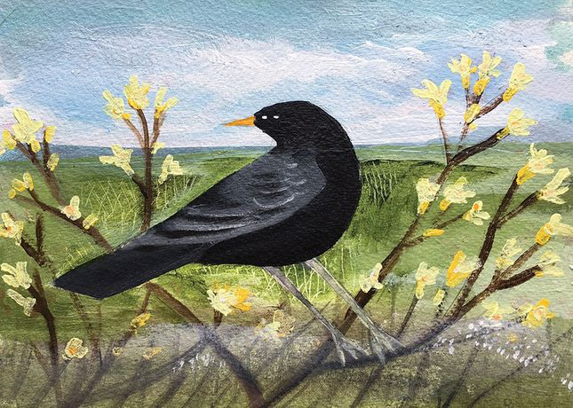 Spring Blackbird. Mixed media on watercolour paper. Angela Harding