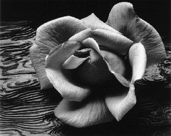 Ansel Adams: Photographs: Image 0