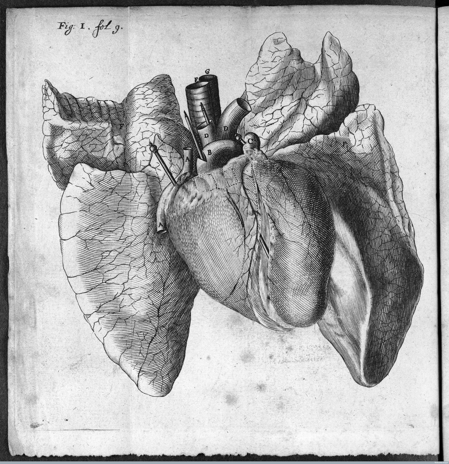 Art and anatomy: life drawing at the Royal College of Physicians ...