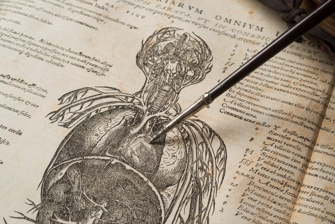 Andreas Vesalius's De humani corporis fabrica iii detail, 1543, with William Harvey's demonsration rod, photograph by John Chase (c) Royal College of Physicians