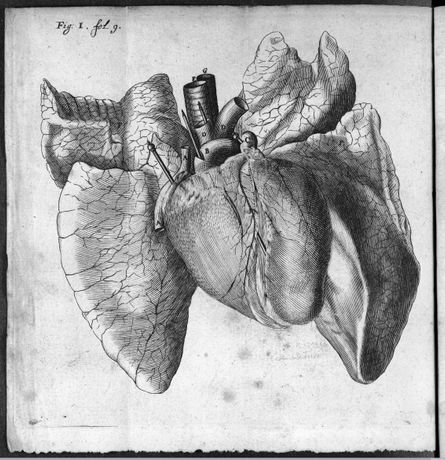 16th Century image of the human heart (c) Wellcome  Library / Wellcome  Images