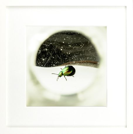 Arthropoda: An exhibition of photography by Miranda Johnston: Image 3