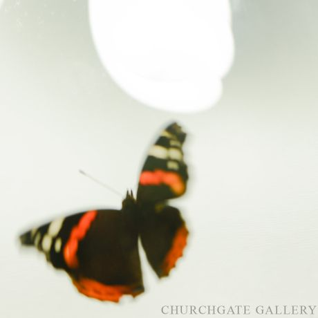 Arthropoda: An exhibition of photography by Miranda Johnston: Image 2