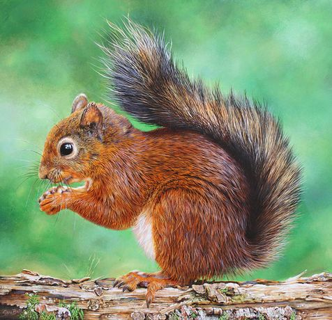 Sara Butt: Red Squirrel 2
