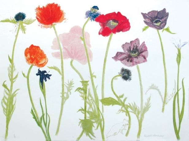 Elizabeth Blackadder, Oriental Poppies