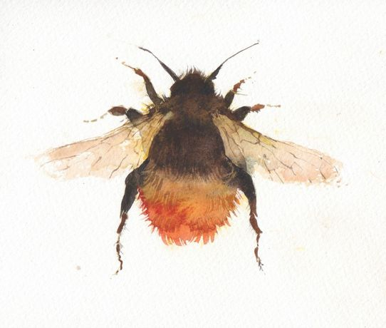 Kate Osborne Red Tailed Bumble Bee