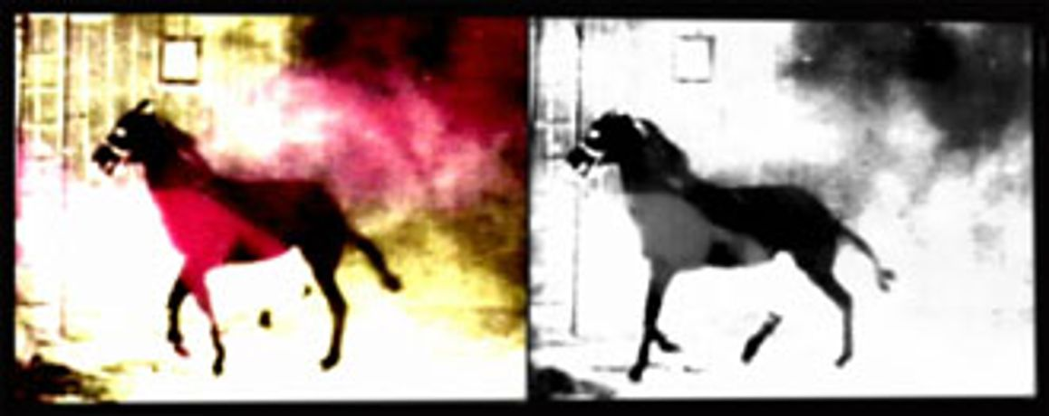 'Berlin Horse', a film by Malcolm le Grice with music by Brian Eno: Image 0