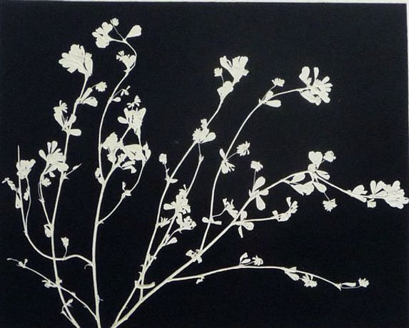 Patricia Swannell, Undergrowth