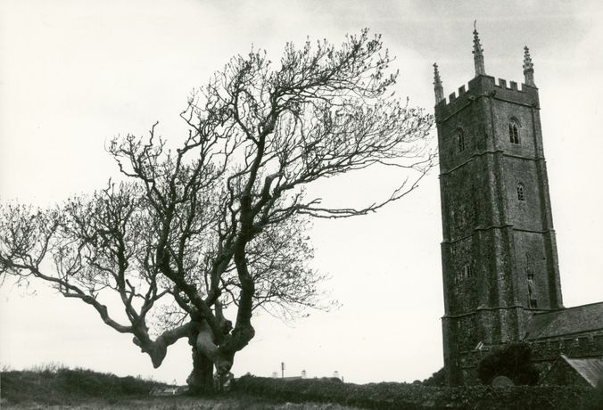 Roger Mayne - Tree and St Nectan's Church, Stoke, Hartland, Devon copyright Mary Evans Picture Library