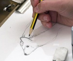 Big Draw 2018 - Wildlife Drawing