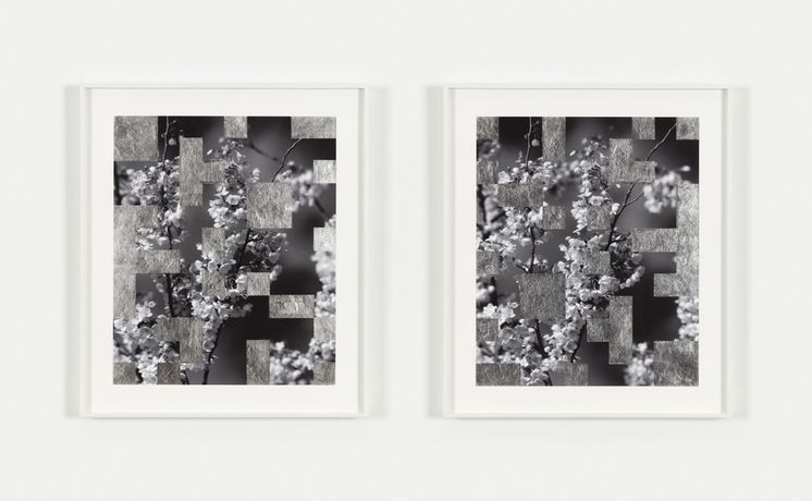 Bing Wright Cherry Tree Grid 6, 2016 silver leaf on inkjet prints diptych, each: 17 3/4 x 14 7/8 in. (45.1 x 37.8 cm) frame, each 22 1/4 x 19 1/4 in. (56.5 x 48.9 cm) signed BW-114-PH