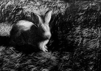 C.A.Halpin, Bunny, 2012, graphite on paper, 1016x1372mm