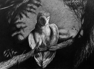 ​C.A.Halpin, The Owl's Murderous Fall, 2012, graphite on paper, 1016x1372mm
