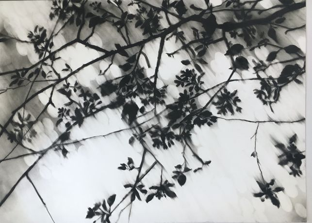 Blossom | charcoal on paper 81 x 111 cm