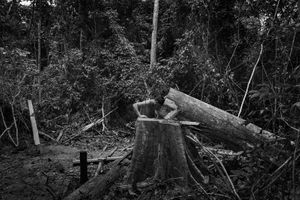 Carmignac Photojournalism Award 10th Edition: 'AMAZÔNIA' BY TOMMASO PROTTI