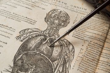 Andreas Vesalius's De humani corporis fabrica iii detail, 1543, with William Harvey's demonsration rod, photograph by John Chase (c) Royal College of P - Copy