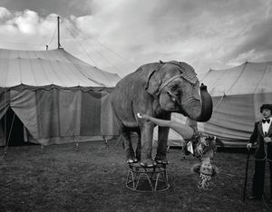 Circus Work - Peter Lavery