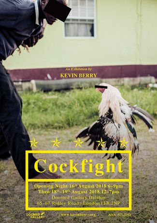 'Cockfight': Image 0