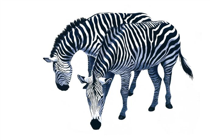Leilani,Zebras,Acrylic on Canvas,24''x36''