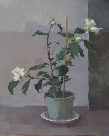 Sarah Spackman RBA, January Camellia