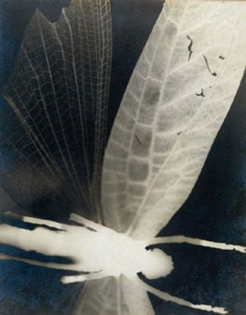 Curtis Moffat: Experimental Photography and Design, 1923-1935: Image 0