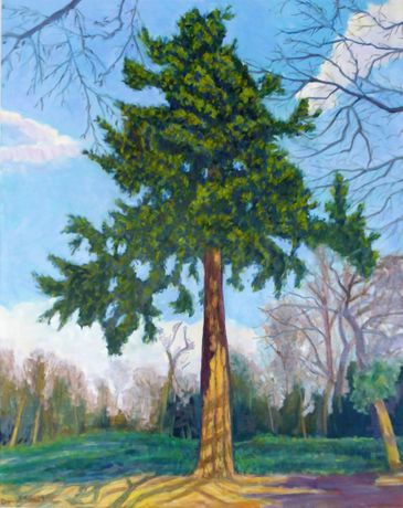 David Shutt (b.1945) 'Great Pine at Cliveden'