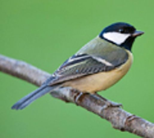 Dawn Chorus walk with the RSPB: Image 0