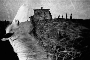 Machiel Botman, Horse and Church2008, Gelatin silver print