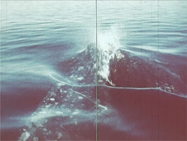Dissecting the Exploding Whale: Image 0