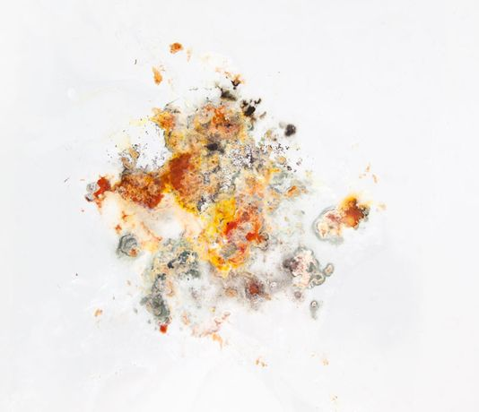 DIY Microscopy: Photography from Food Waste: Image 1