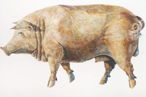Don Nice  Pig  1969  Oil on canvas  48 x 72 in.