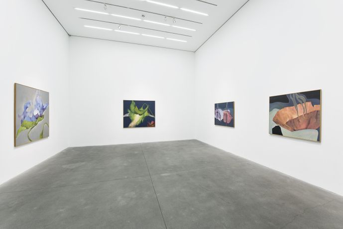 Installation view,  Courtesy Alison Jacques Gallery, London