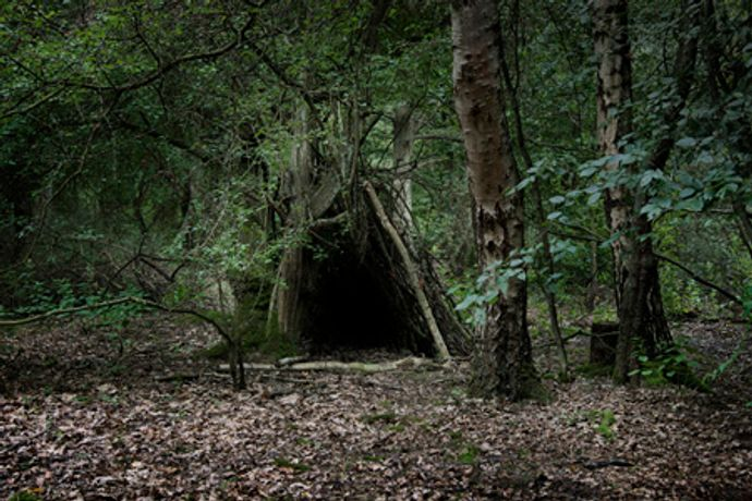 Ellie Davies:  Into the Woods: Image 0