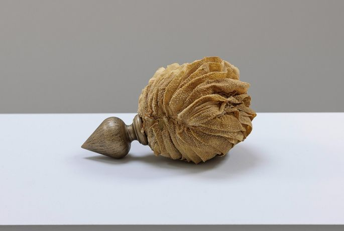 Elpida Hadzi-Vasileva  Carapace of Beauty  2016 cow's stomach and turned wood  15 x 17 x 25 cm  installation view of the exhibition Making Beauty, Djanogly Gallery, Nottingham Lakeside Arts, Nottingham University   photograph by Nick Dunmur