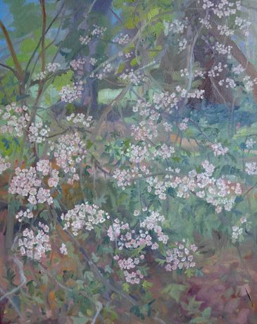 Hawthorn Flowers June 2017 Oil on Canvas