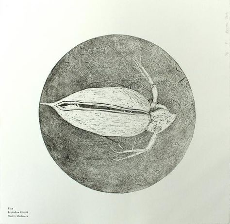 Etching Evening Class: Image 3