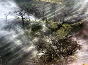 John Eastwood - Landscape Photography 'Shrouded Trees'