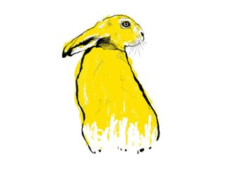 Yellow Hare screenprint by Tiff Howick