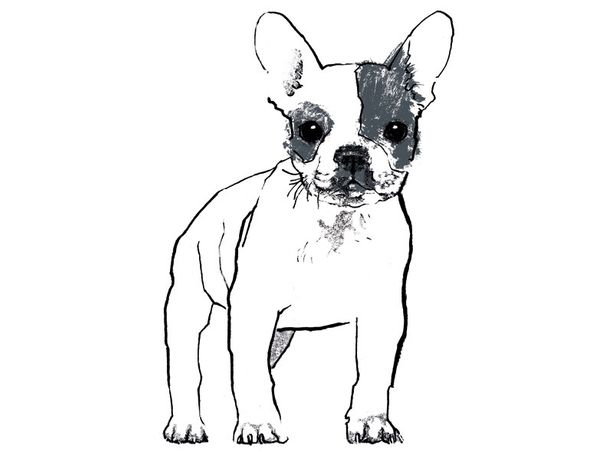French Bulldog screenprint by Tiff Howick