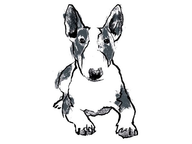 Bull Terrier screenprint by Tiff Howick