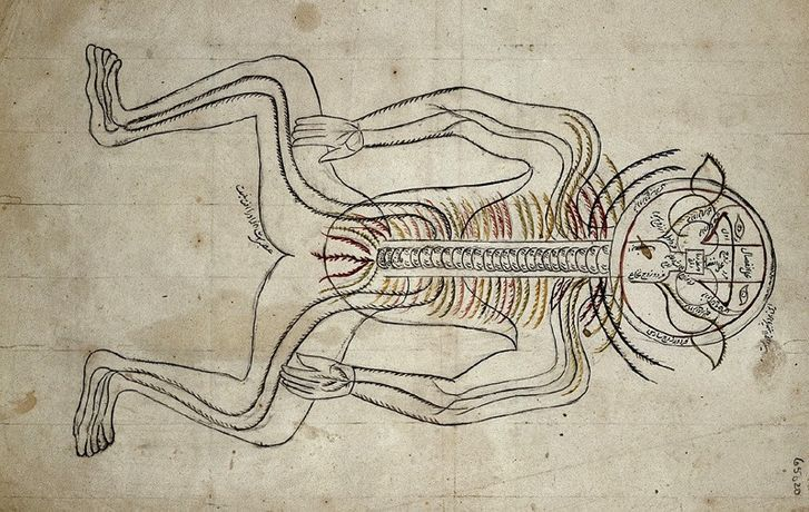 Image by 14th-century Persian anatomist Mansur ibn Muhammad Ilyas. Treatise on the anatomy of the human nervous system.