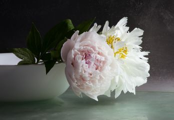 Roger Ricco